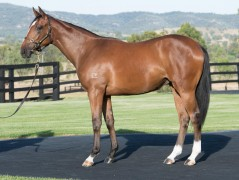 LOT 253 All Too Hard x Squillionaire filly 1
